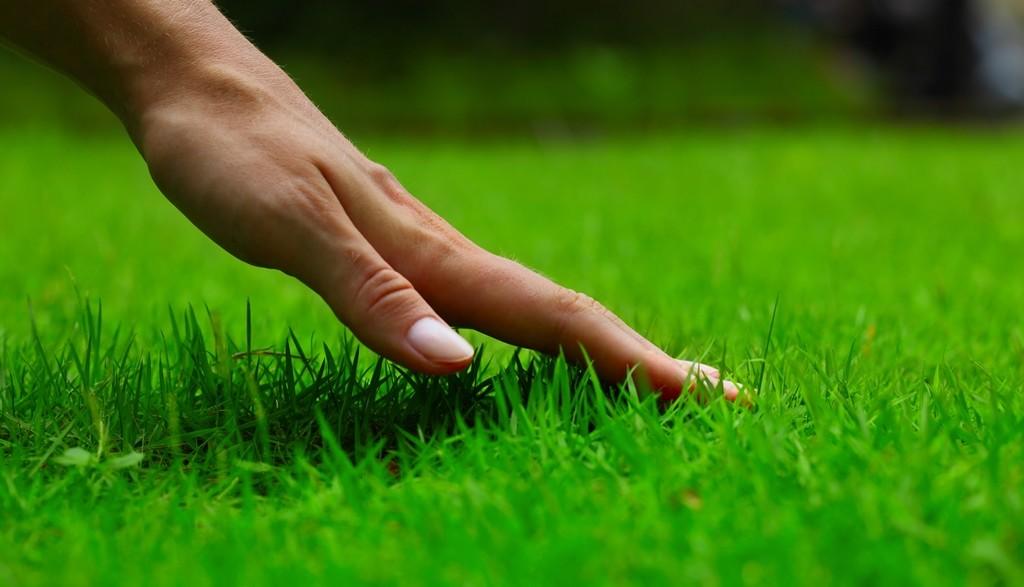 Pemilihan Rumput Yang Cocok untuk Taman Minimalis